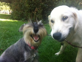 Dog sitters West London